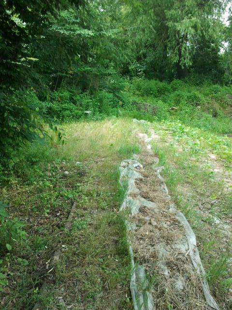 This time the trees blocked the line completely, so had to walk to the left through the fields, around this obstacle.