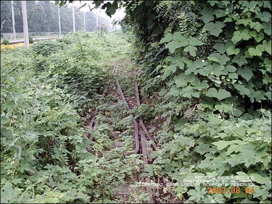 SuIn line Illi Station overgrown