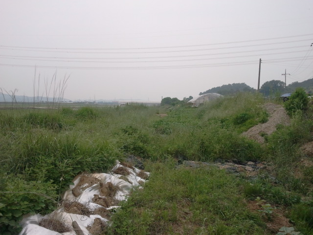 For a short distance the railway is obscured and difficult to find in the country side.