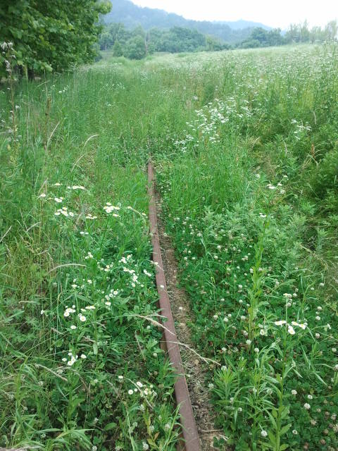 At some points the rails can be found easily, and just a few years ago they might have even still been visible on some of the satellite maps. The grass seems to have grown rapidly recently, pictures from 2007 and 2009 show that the line was not yet overgrown during those years.